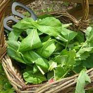 Fresh Salad Greens with Classic Vinaigrette