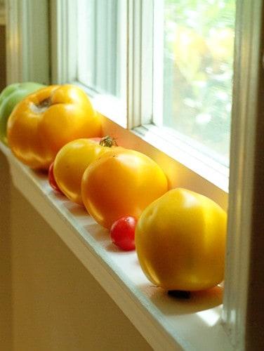 Fresh tomatoes ready to make a BLAT Wrap