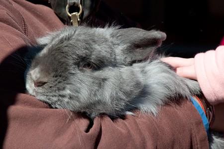 Bunny at Antler Hill Village