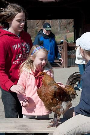 Rooster at Antler Hill Village