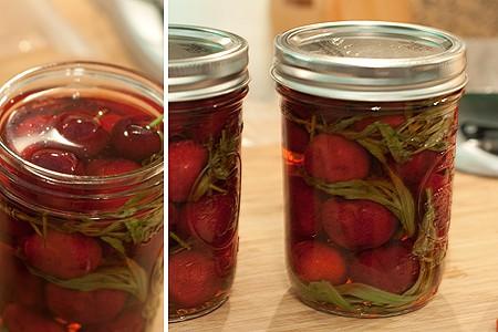 Pint jars of cherries and tarragon with vinegar-sugar mixture added