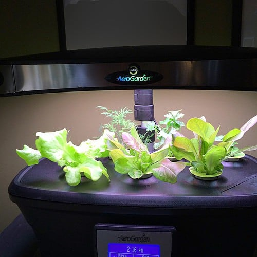 Herbs and lettuce growing in the Miracle-Gro AeroGarden ULTRA LED