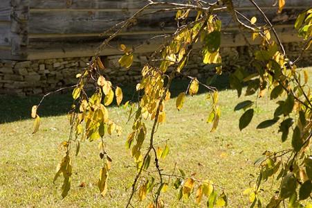 New Echota Cherokee Capital Council House Changing Leaves