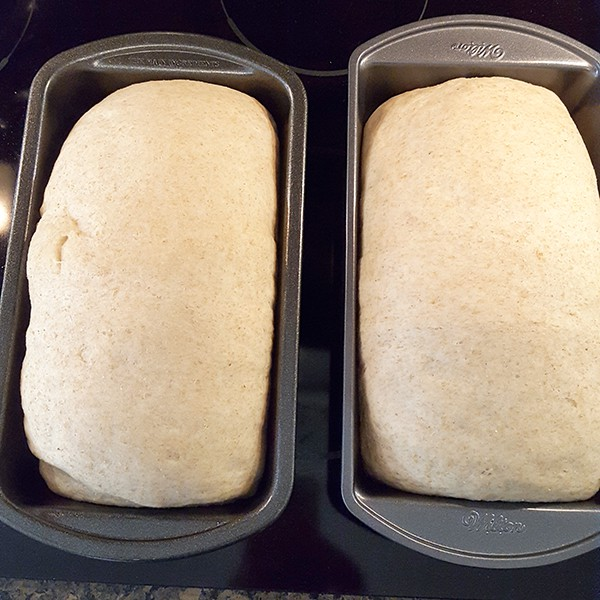 Dough in pans after second rise - ready to bake Easy Homemade Bread Recipe