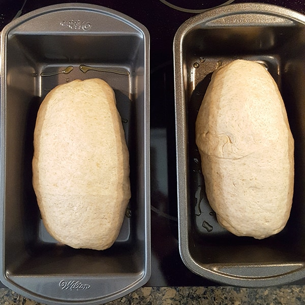 Place formed loaves in oiled loaf pans